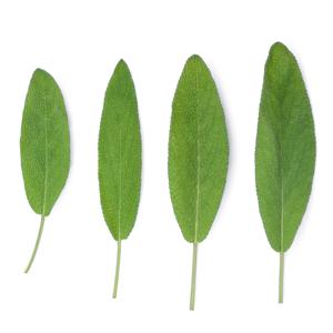 Figureform-Basentee-Salbei